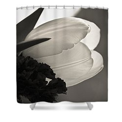 Lit Tulip Shower Curtain by Marilyn Hunt