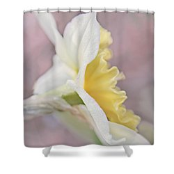 Shower Curtain featuring the photograph Softness Of A Daffodil Flower by Jennie Marie Schell