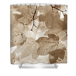 Softness Of Brown Maple Leaves Shower Curtain by Jennie Marie Schell