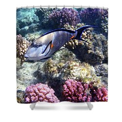 Sohal Surgeonfish 5 Shower Curtain