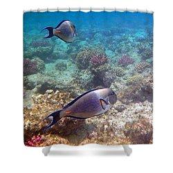 Sohal Surgeonfish Shower Curtain
