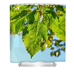 Solar Panels Shower Curtain
