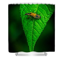 Soldier Beetle Shower Curtain by Bruce Pritchett