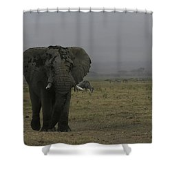 Shower Curtain featuring the photograph Solitary Bull Elephant by Gary Hall