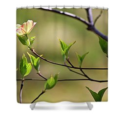 Solitary Dogwood Bloom Shower Curtain by Teresa Mucha