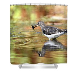 Solitary Sandpiper With Belostomatide Shower Curtain