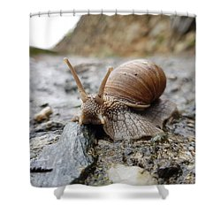 Solitary Snail Shower Curtain