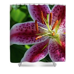 Solitary Splendor Shower Curtain