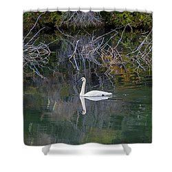 Solitary Swan In Autumn Shower Curtain by Michele Cornelius