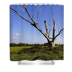 Solitary Tree Shower Curtain
