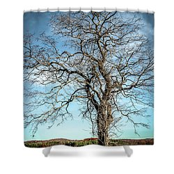 Solitary Tree Shower Curtain by Wayne King