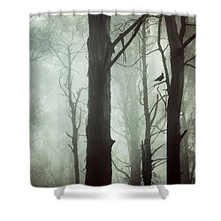 Shower Curtain featuring the photograph Solitude by Amy Weiss