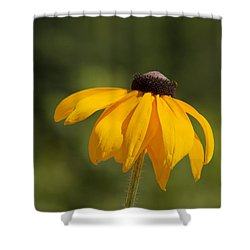 Solo Black-eyed Susan Shower Curtain