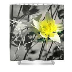 Solo  Shower Curtain by Clarice Lakota