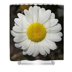 Solo Daisy Shower Curtain