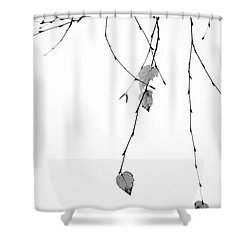 Shower Curtain featuring the photograph Solo by Rebecca Cozart