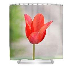 Solo Tulip Shower Curtain by William Bartholomew
