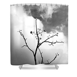 Solstice Dance #3 Shower Curtain