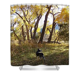 Sombra Shower Curtain