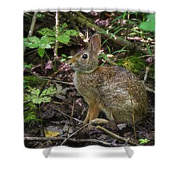 Shower Curtain featuring the photograph Some Bunny Stopped By by Bill Pevlor