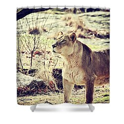 Something Caught His Eye Shower Curtain by Karol Livote