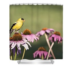 Shower Curtain featuring the photograph Something Finchy Going On by Stephen Flint