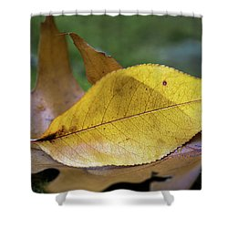 Shower Curtain featuring the photograph Something Fishy by Dale Kincaid