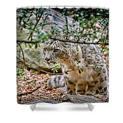 Something Got His Attention Shower Curtain by Karol Livote