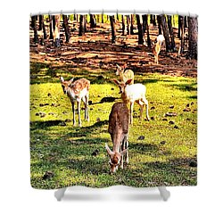 Something This Way Cometh Shower Curtain
