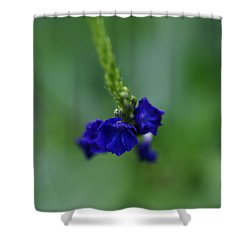 Somewhere In This Dream Shower Curtain by Linda Shafer