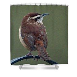 Song Bird 2 Shower Curtain