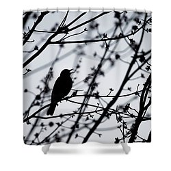 Shower Curtain featuring the photograph Song Bird Silhouette by Terry DeLuco