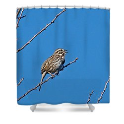 Shower Curtain featuring the photograph Song Sparrow by Michael Peychich