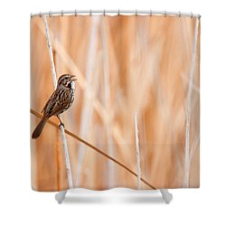 Song Sparrow Shower Curtain