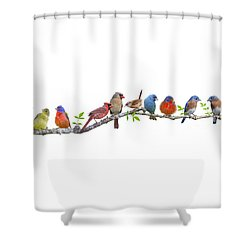 Songbirds On A Leafy Branch Shower Curtain
