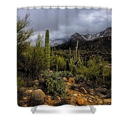 Shower Curtain featuring the photograph Sonoran Winter No.1 by Mark Myhaver