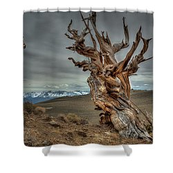 Soaring Over Bristle-cone Pine Shower Curtain