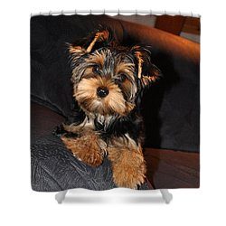 Sophie Shower Curtain by Adriana Holmes