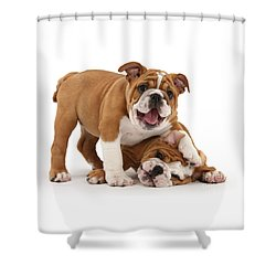 Sorry, Didn't See You There Shower Curtain