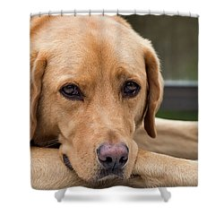 Soulful Eyes Shower Curtain by Kathy King