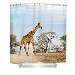 South African Giraffe Shower Curtain