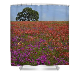 South Texas Bloom Shower Curtain by Susan Rovira