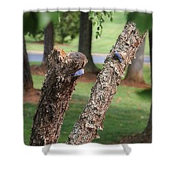 Shower Curtain featuring the photograph Southern Blue Birds by Debra     Vatalaro