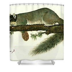 Southern Fox Squirrel  Shower Curtain