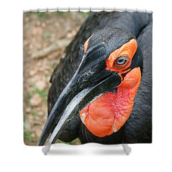 Southern Ground Hornbill Shower Curtain