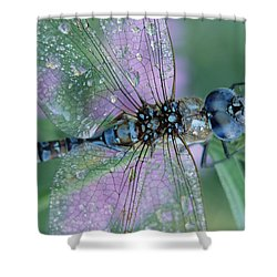 Southern Hawker Dragonfly Aeshna Cyanea Shower Curtain by Tim Fitzharris