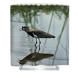 Southern Lapwing Calling Shower Curtain by Robert Hamm