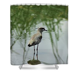 Southern Lapwing In A Lake Shower Curtain by Robert Hamm