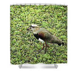 Southern Lapwing Shower Curtain by Norman Johnson