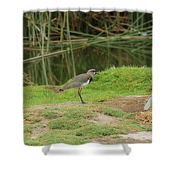 Southern Lapwing On Shore Shower Curtain by Robert Hamm